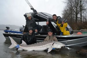 Lower Fraser River Sturgeon caught in late March